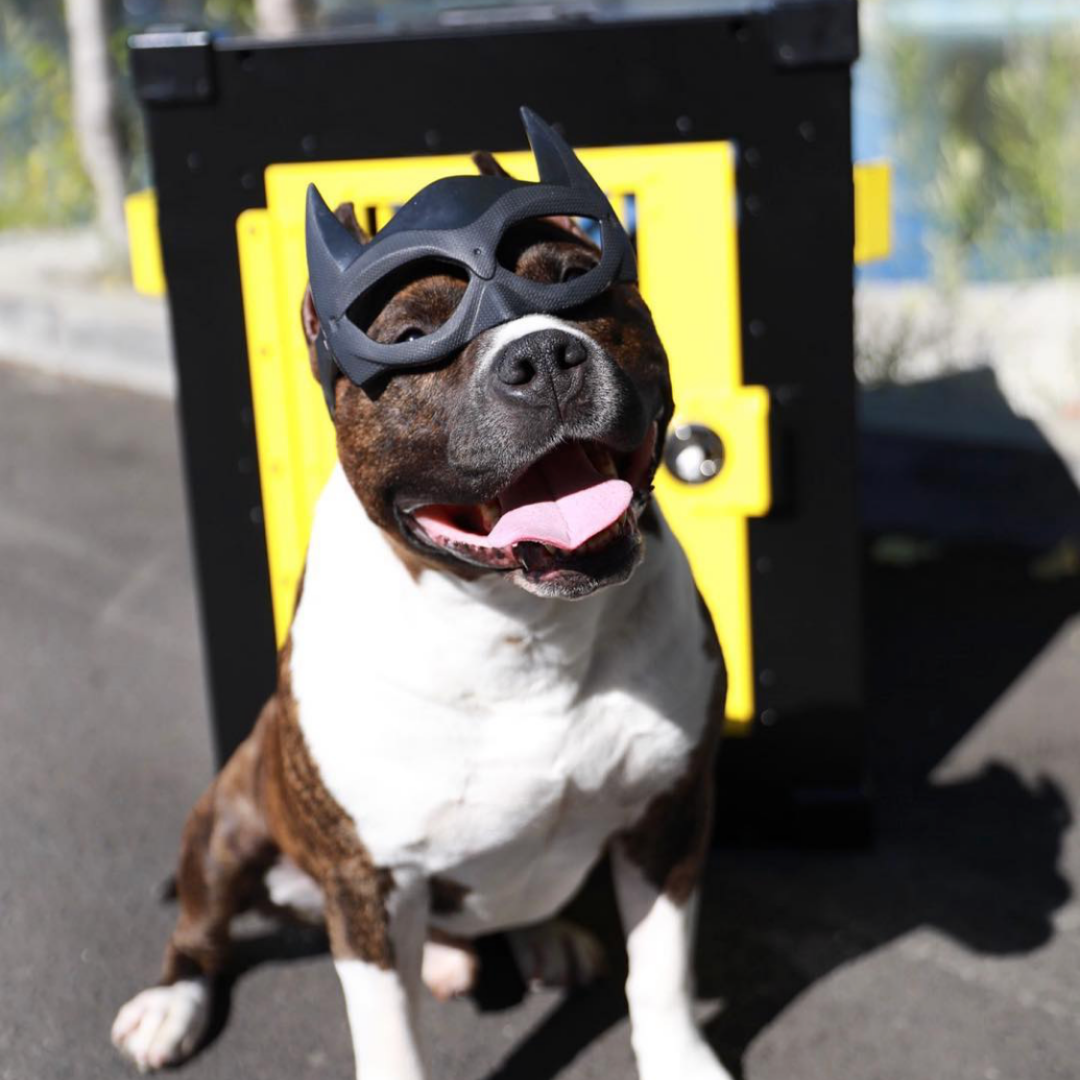 batman dog crate