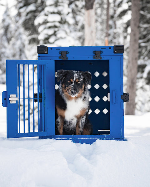 blue collapsible large impact dog crate with australian shepherd puppy
