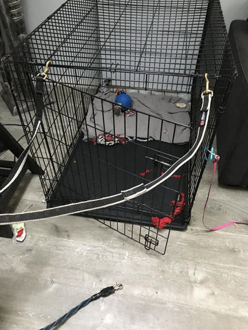 wire dog crate damaged