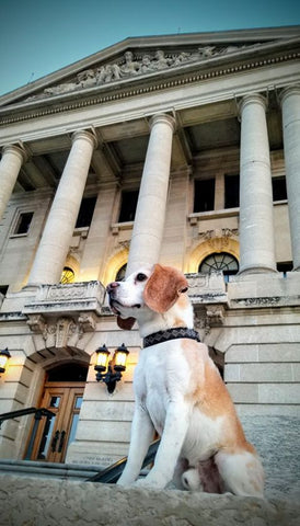 bugsy at court house