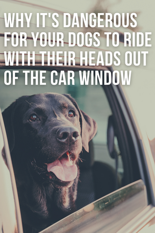 why its dangerous for dogs to ride with their heads out of the car window