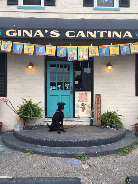 dog friendly spot at gina's cantina