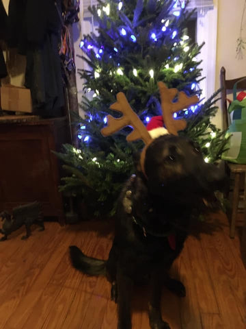 dog in reindeer hat