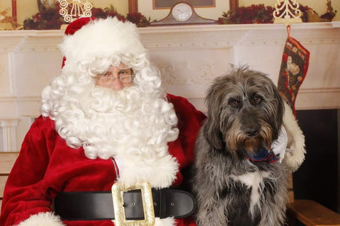 dog meeting santa