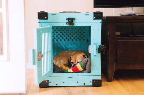 dog sleeping in small teal collapsible impact dog crate