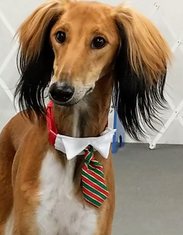dog wearing xmas tie