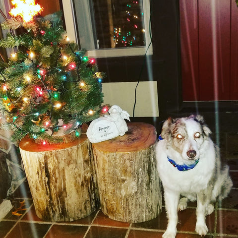 dog with xmas tree