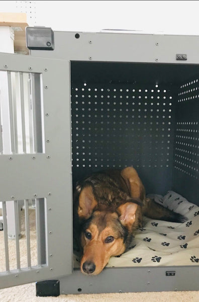 dog with severe separation anxiety comfortable in high anxiety impact crate