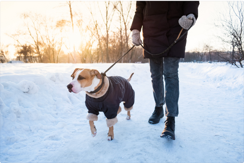 dog wearing jacket walking in snow with person