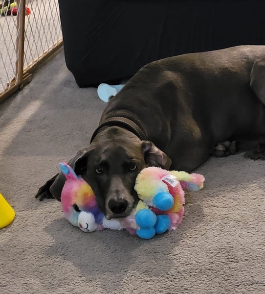 dog resting on top of stuffed animal
