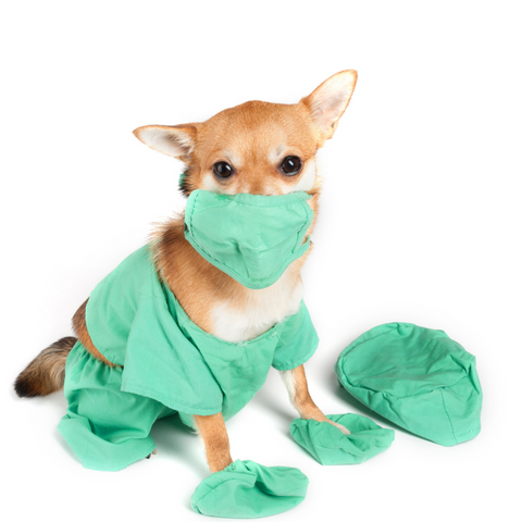 dog wearing mask and medical scrubs