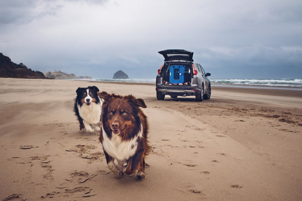 dogs running on beach with dog crate in car in background