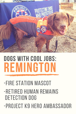 dogs with cool jobs remington pinterest