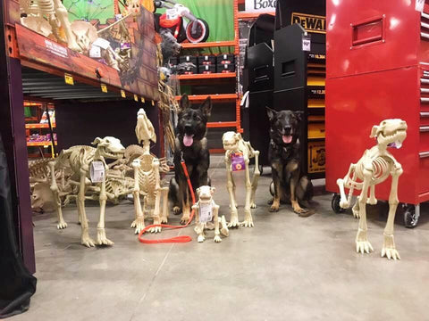 dogs sitting with fake skeleton dogs