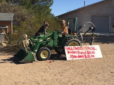 dogs on tractor halloween