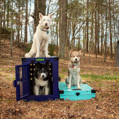 purple teal folding dog crates