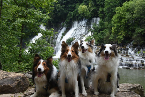 collies hiking waterfall
