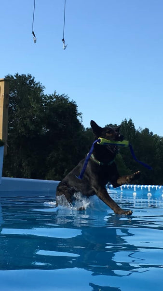 german shepherd dog dock diving