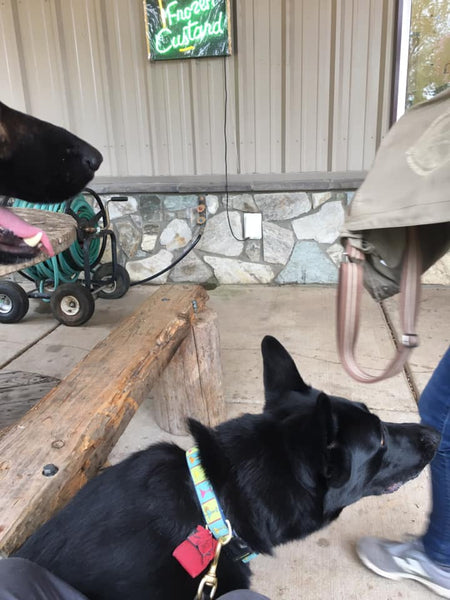 black german shepherds at dog friendly Messicks Market