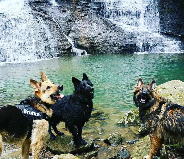 german shepherd dogs hiking waterfall