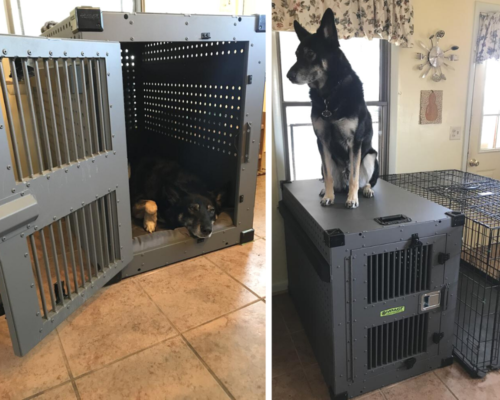 german shepherd mix in impact crate