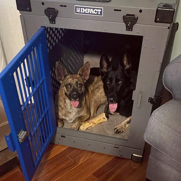 gray collapsible dog crate with blue door