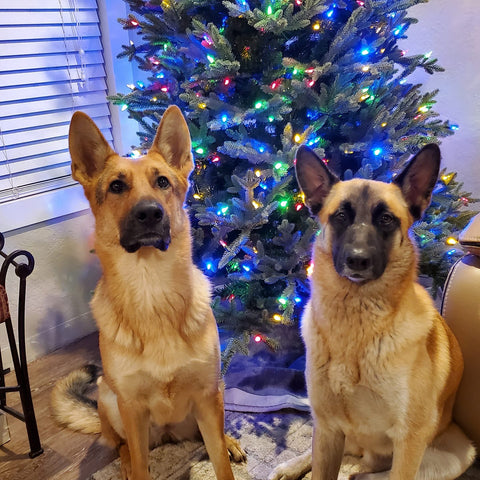 dogs with xmas tree