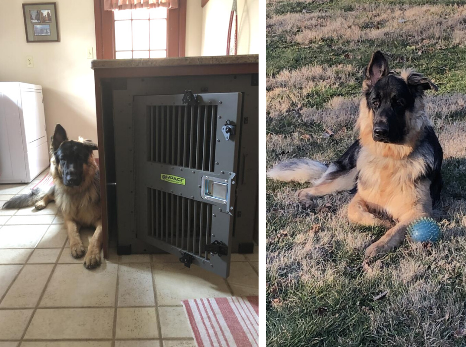 heavy duty dog crate for german shepherd