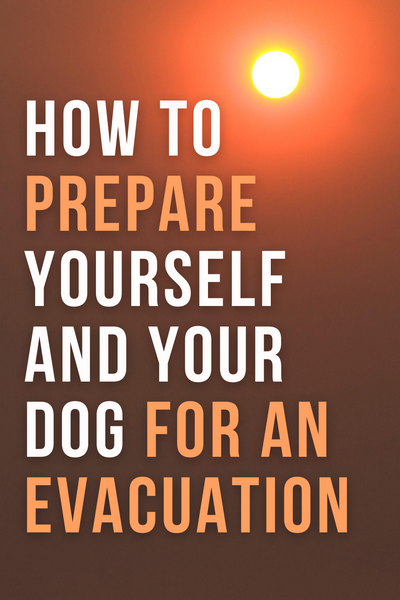 how to prepare yourself and your dog for an evacuation