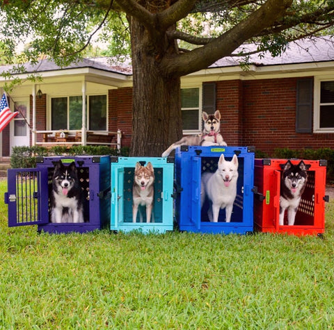 huskies in colorful collapsible impact crates