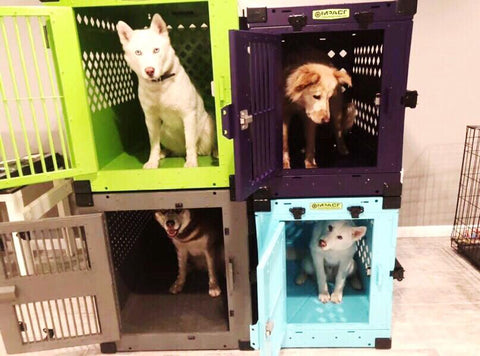 colorful dog crates for huskies