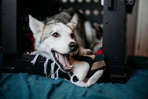 dog crate for husky puppy