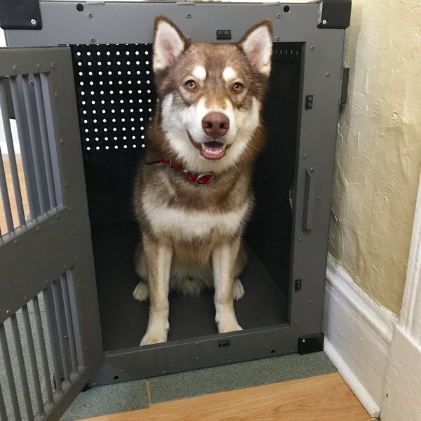 husky in high anxiety impact dog crate