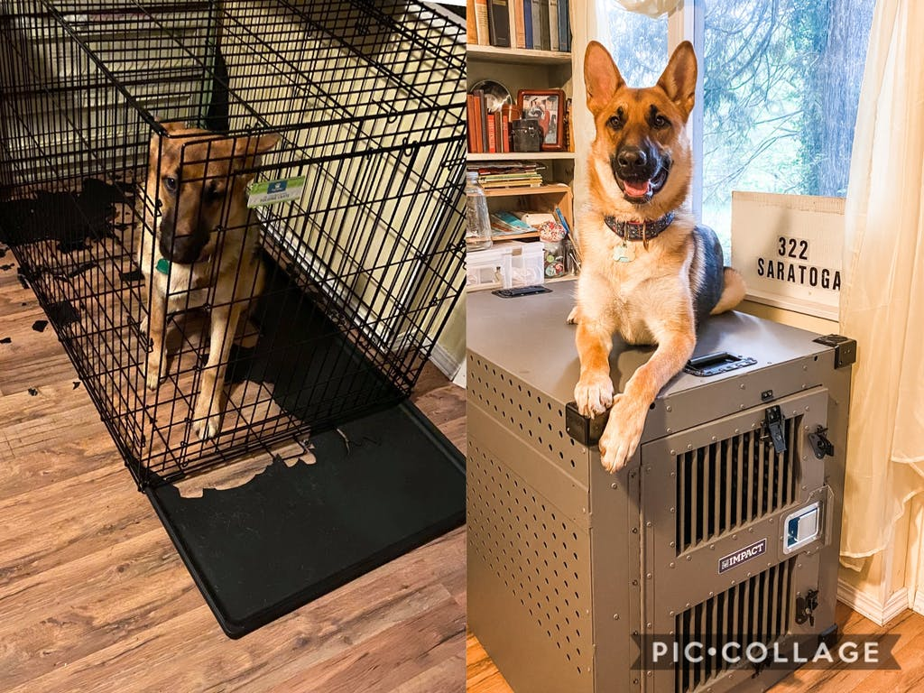 german shepherd escape wire dog crate