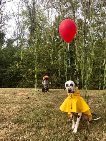 it movie dog costumes