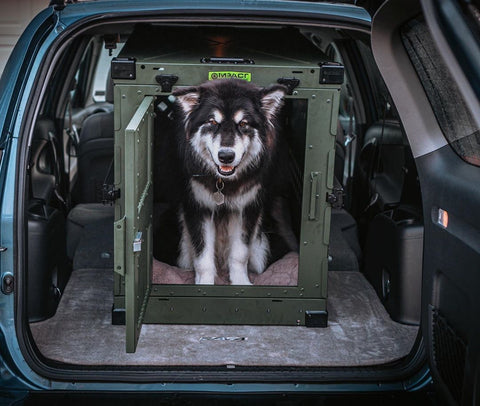 malamute in custom dog crate