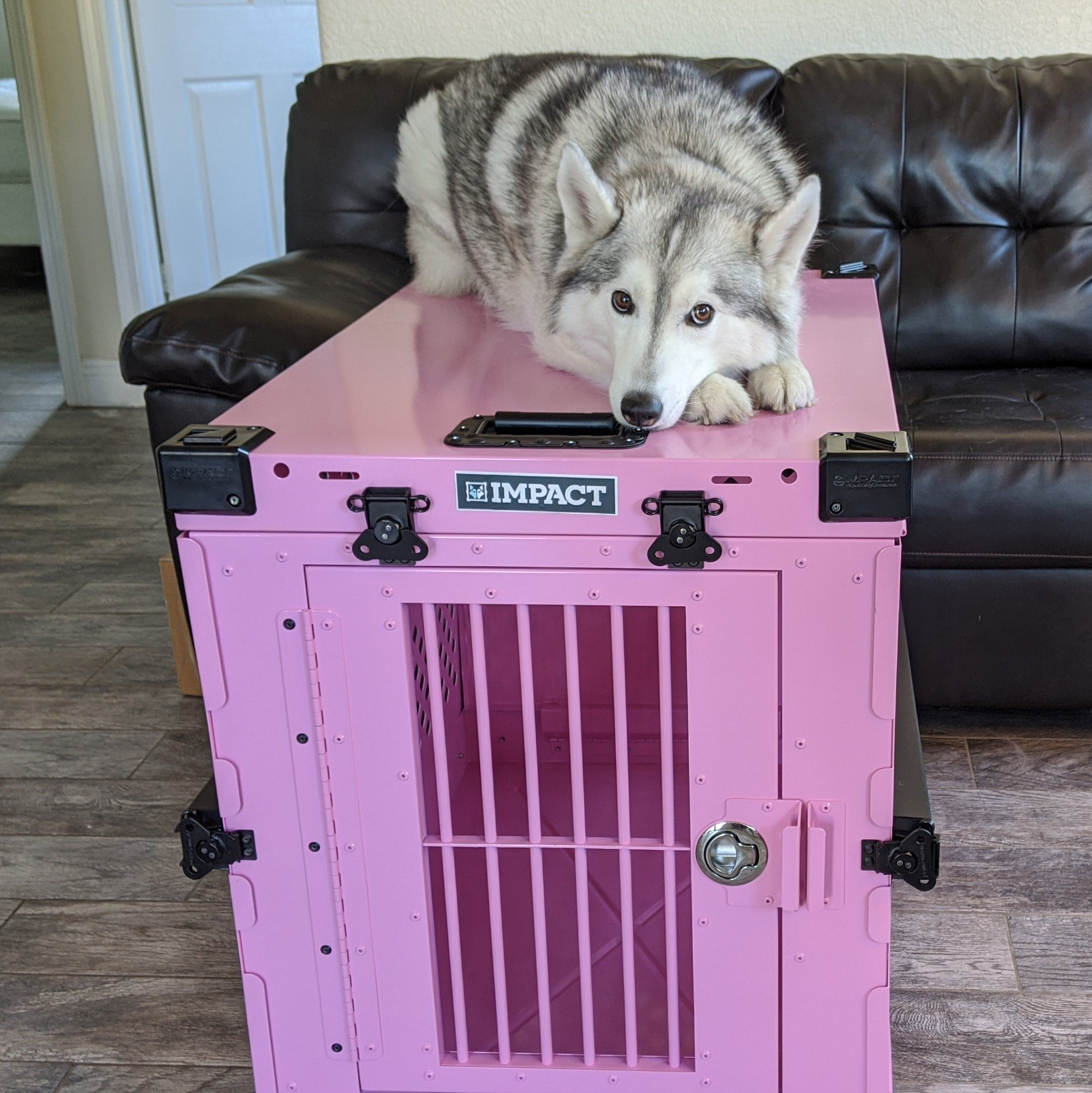 pink collapsible crate with husky