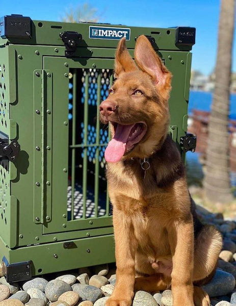 od green collapsible crate with puppy