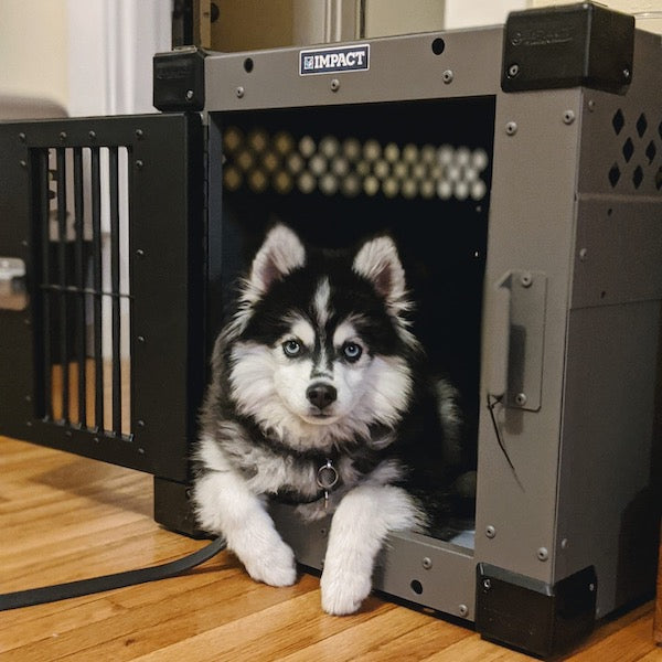pomsky in gray dog crate with black door