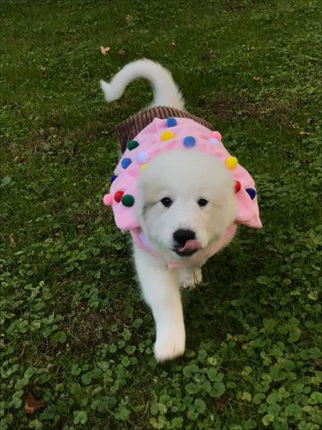 puppy in cupcake costume