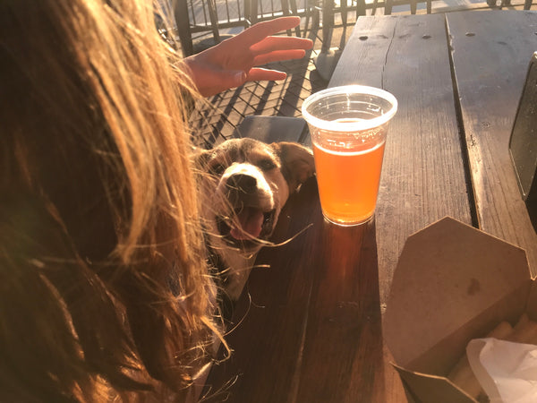 puppy at dog friendly restaurant the buoy coeur d alene