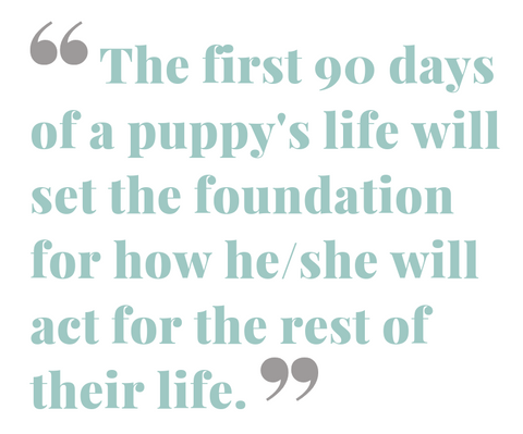 the first 90 days of a puppys life will set the foundation for how they will act for the rest of their life quote