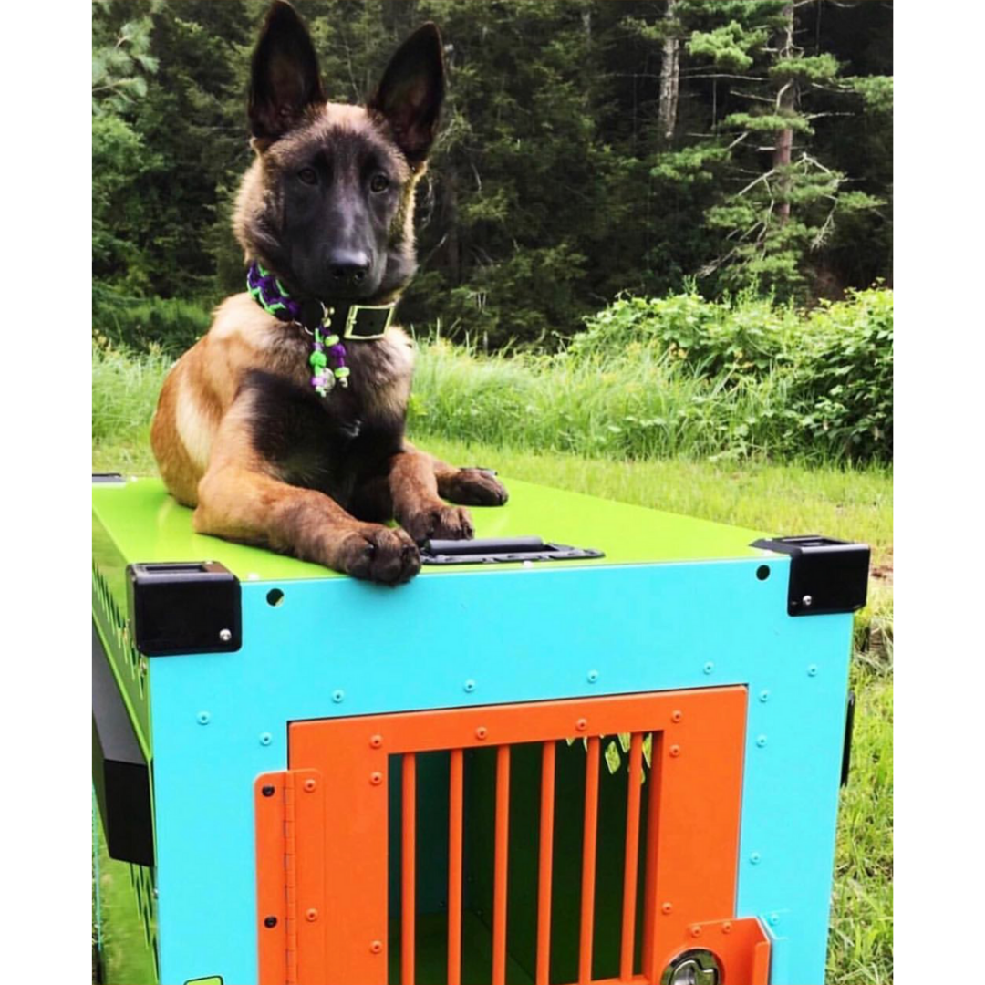 scooby doo dog crate