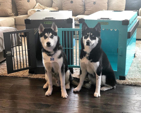 dog crates for siberian huskies