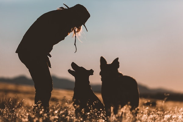 girl and dogs silhouette in sunset
