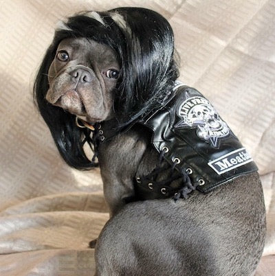 sons of anarchy dog costume
