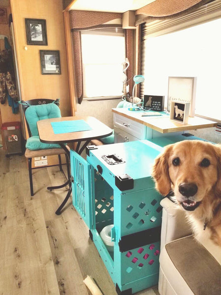 golden retriever with teal collapsible impact dog crate in rv