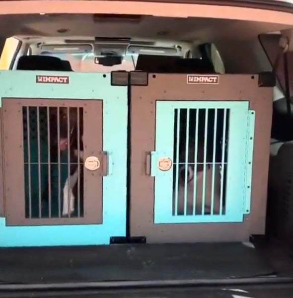 teal gray stationary dog crates