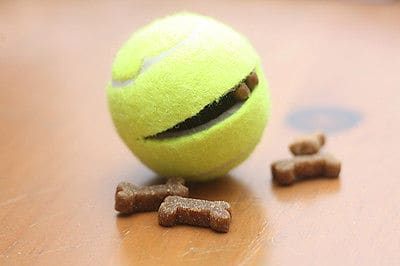 tennis ball treat dispenser