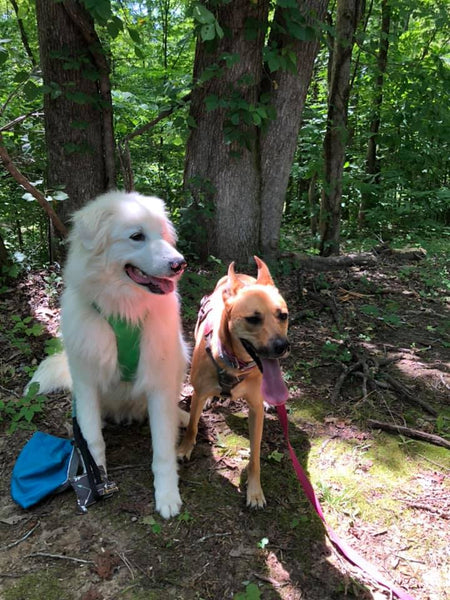 two dogs in forest